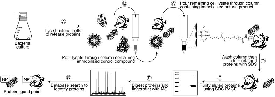 Forward Chemical Proteomics