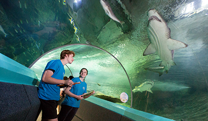 PACE students observe the marine wildlife at Manly SEA Life Sanctuary during their PACE activity