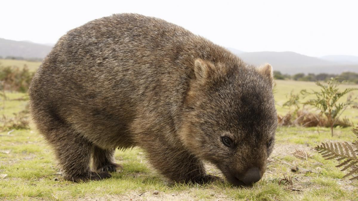 image - Is WOMBAT the right tool for me?