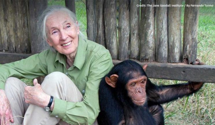 Dr Jane Goodall DBE shares inspiring message at Macquarie University
