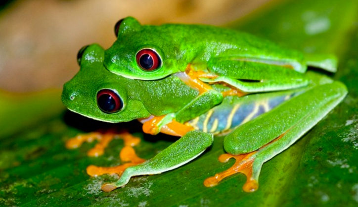 FROGS_FEATURE